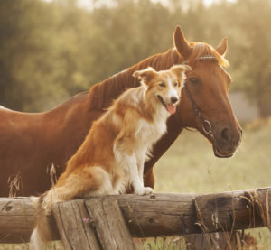 horse_and_dog_Eastern Equine Encephalitis in Central Mass